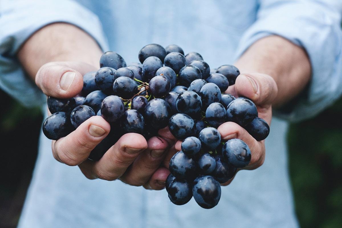 Supportare il settore vitivinicolo